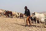 A Bedouin Palestinian shepherd tends to his herd in the Ein al-Uja village, close to the West Bank city of Jericho, April 27, 2019. Israeli bulldozers had demolished the village in several times, but villagers said that they insist on remaining in their village. Photo by Ayat Arqawy