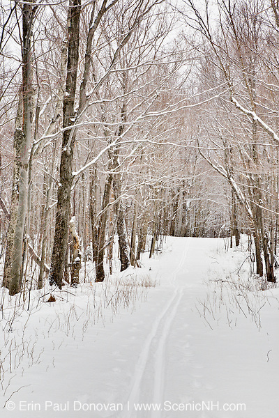 A snow covered Notchway Trail. The Notchway Trail is the main trail of the Lafayette Ski Trails and follows the old Route 3 between Route 141 and Route 18 in the town of Franconia, New Hampshire.