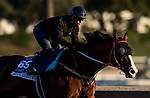 OCT 29: Breeders' Cup Dirt Mile entrant Blue Chipper, trained by Kim Young Kwan, works at Santa Anita Park in Arcadia, California on Oct 29, 2019. Evers/Eclipse Sportswire/Breeders' Cup