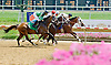 Bunker Hill winning  at Delware Park on 7/30/12