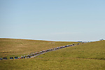 The peloton in one long line during Stage 15 of the 104th edition of the Tour de France 2017, running 189.5km from Laissac-Severac l'Eglise to Le Puy-en-Velay, France. 16th July 2017.<br /> Picture: ASO/Pauline Ballet   Cyclefile<br /> <br /> <br /> All photos usage must carry mandatory copyright credit (&copy; Cyclefile   ASO/Pauline Ballet)