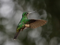 Ecuador, Prov. Pichincha, Yanacocha, Reserve