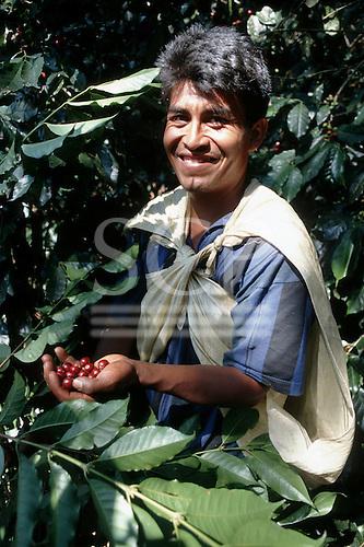 Quillabamba, Peru. Coffee picker at work; Ccochapampa Fair Trade cooperative.