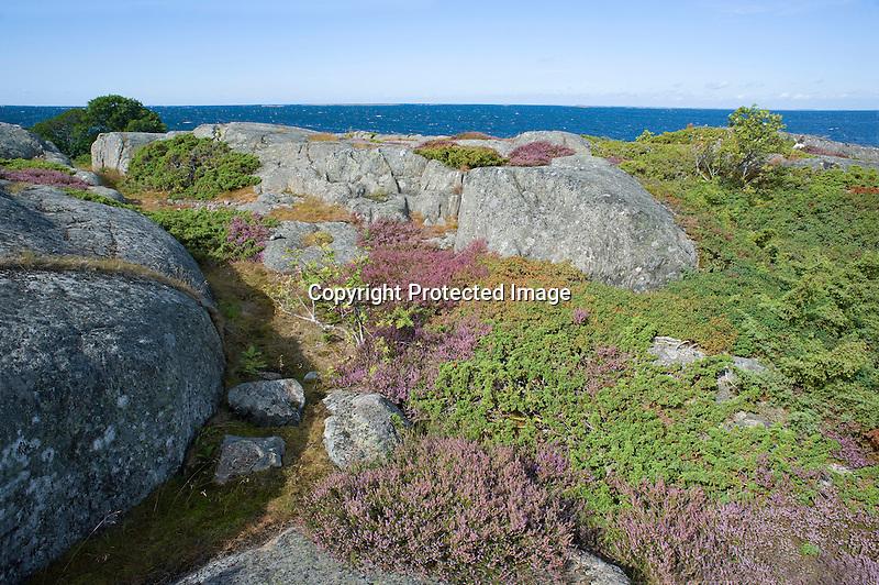 Rocks and Heather and Sea on the Island of Kökar in Åland