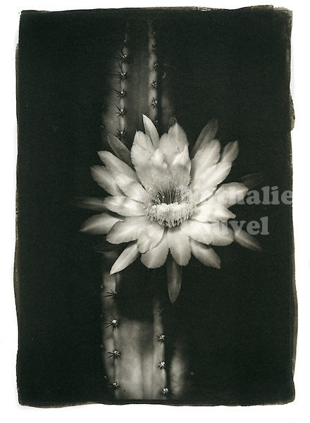 "This is a Platinum Palladium print on Arches Platine watercolor paper. Image size 10"" x 8"" / 25 cm x 20 cm"