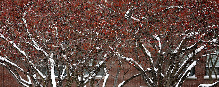 Trees coated in snow on the Lincoln Park campus of DePaul University in Chicago as the New Year brought two days of lake effect snow and ice. (Photo by Jamie Moncrief)
