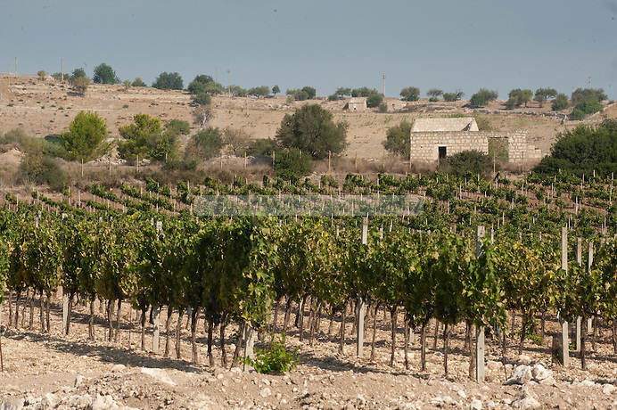 Occhipinti biodynamic winery near Vittoria in the province of Ragusa, Sicily, Italy