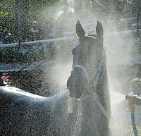 The bath, Saratoga. Saratoga Race Course, Saratoga Racetrack, beautiful horse racing, Thoroughbred racing, horse, equine, racehorse, morning mood