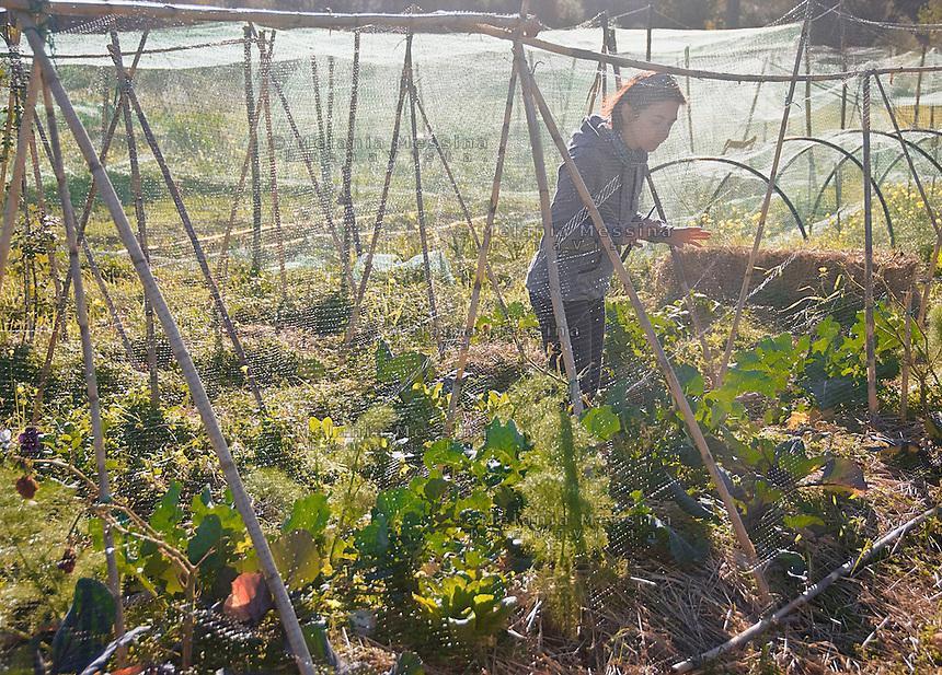 Palermo: l'orto urbano condiviso nella periferia nord.<br /> Palermo: community garden crops within the city.