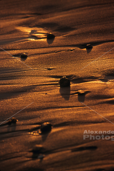 USA Middletown, RI - Close of sunset light on wet beach sand at Sachuest Beach.