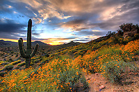 Wildflower Goodness at Sunset - Arizona
