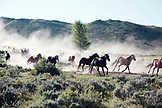 USA, Wyoming, Encampment, Wranglers leading horses to the barn in the early morning