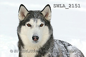 Carl, ANIMALS, wildlife, photos(SWLA2151,#A#)