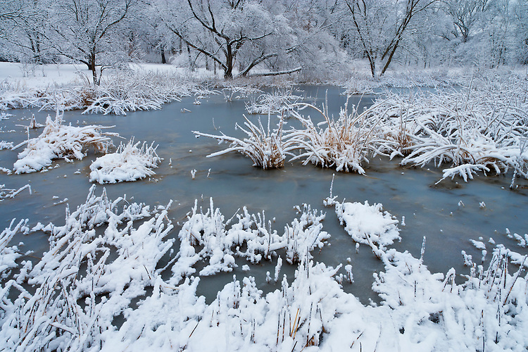 Winter scene on a pond at The Morton Arboretum; Lisle, IL