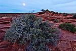 Sage Brush in full moonlight.