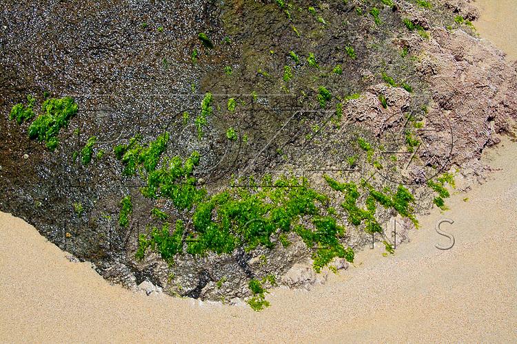 Musgos em rocha na Praia do Sono, Paraty - RJ, 01/2016.