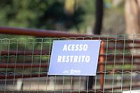 BELO HORIZONTE, MG, 04.07.2019 - CIDADE-MG - Filhote de gorila no Jardim Zoológico de Belo Horizonte, na região da Pampulha, em cidade de Belo Horizonte, nesta quinta-feira, 04.(Foto: Doug Patricio/Brazil Photo Press)