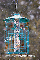 00585-036.09 American Goldfinches (Carduelis tristis) & Carolina Chickadee at Squirrel proof feeder, Marion Co. IL