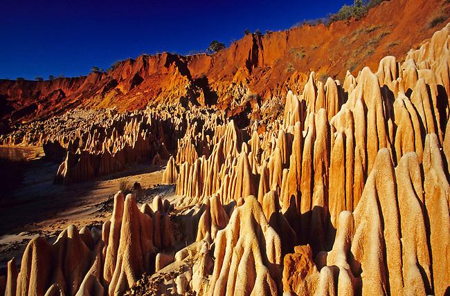 Parc national de l'Ankarana, les 'Tsingy' rouges. *** Tsingy red massif in the Ankarana national park.