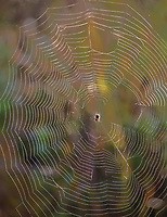 A spider sits in his web awaiting prey.