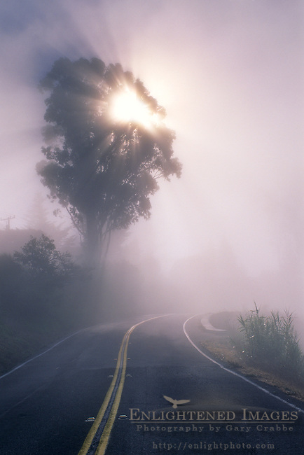 Fog and sunbeam through tree along the Panoramic Highway, Mount Tamalpais, Marin County, California