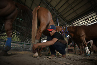 VILLAVICENCIO - COLOMBIA. 13-10-2018: Un vaquiano revisa los caballos antes de la competencia durante el 22 encuentro Mundial de Coleo en Villavicencio, Colombia realizado entre el 11 y el 15 de octubre de 2018. / Cowboy checks the horses before competing during the 22 version of the World  Meeting of Coleo that takes place in Villavicencio, Colombia between 11 to 15 of October, 2018. Photo: VizzorImage / Gabriel Aponte / Staff
