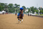 JUNE 06: Thunder Snow prepares for the Met Mile at Belmont Park in Elmont, New York on June 06, 2019. Evers/Eclipse Sportswire/CSM