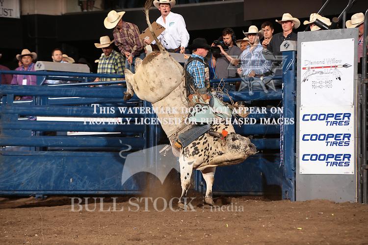 17 148 205 Jpg Bull Stock Media