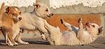 India, Uttar Pradesh, Agra, puppies