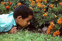1R14-005b  Eastern Box Turtle - being watched by boy in garden near marigolds - Terrapene carolina