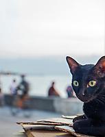 A cat along Manila Bay, Philippines