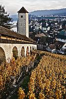 Vineyard and Rhein River from Munot Castle, Schaffhausen, Switzerland