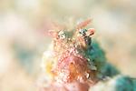 Scorpionfish bokeh , Sponsor Marco VIncent Resort, Puerta Galera, Philippines