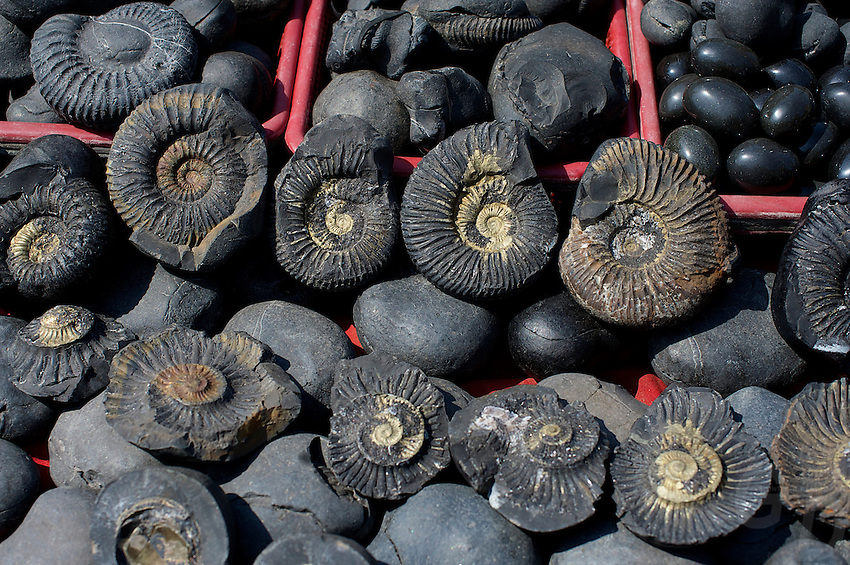 Ammonites used for worship and also bought by tourist for sale at the Pashupati Templs and cremation area Kathmandu, Nepal