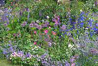 Allium, Cistus, Nepeta, Alchemilla, roses, Lupinus, Delphinium, geranium, for pretty planting combination in blue, purple, pink color theme