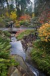 Bellevue Botanical Garden, Bellevue, Washington, State, Pacific Northwest, USA
