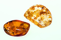 AMBER AND COPAL<br /> (Variations Available)<br /> Polished Amber and Copal <br /> Both amber (left) and copal (right) are fossilized tree resin. Copal is resin that has not yet matured to the amber stage.