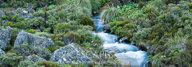 Alpine stream running through alpine vegetation, Aoraki Mount Cook National Park, UNESCO World Heritage Area,  Mackenzie Country, New Zealand, NZ
