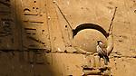 Bird in Hieroglyph, Egypt