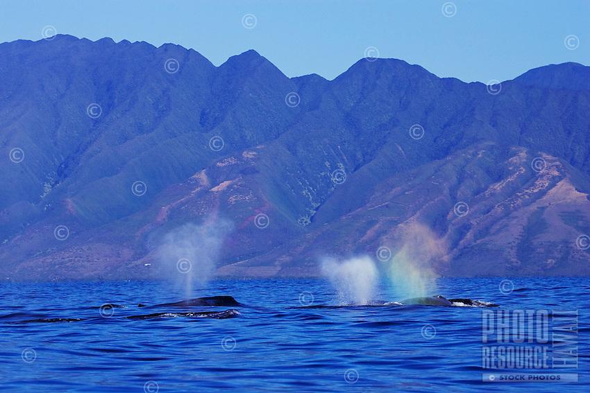Competition pod near Molokai, Hawaii.