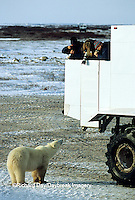 01874-089.20 Polar Bear (Ursus maritimus) near Tundra Buggy  Churchill  MB