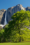 Upper Yosemite Fall in spring, Yosemite Valley, Yosemite National Park, California