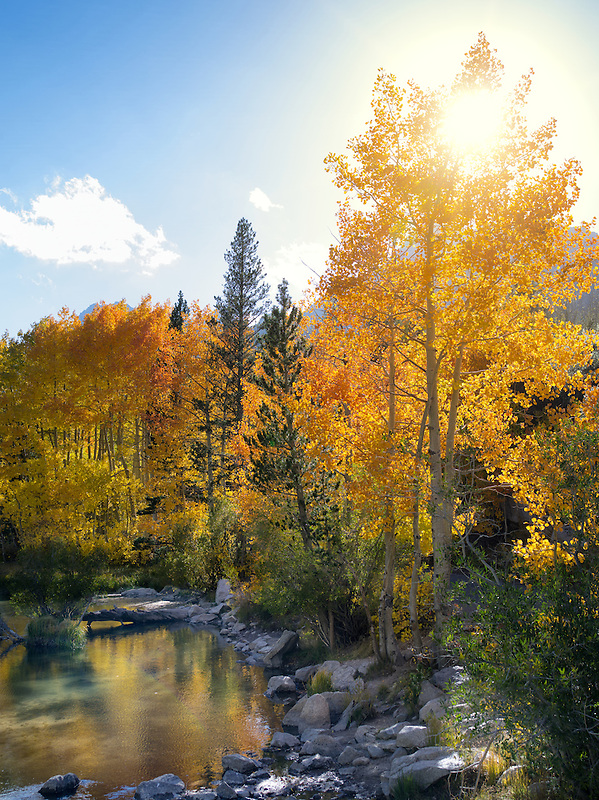 Fall colored aspens along Bishop Creek, California. Inyo County. Eastern Sierra Nevada Mountins