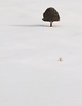 a single tree sits in a snowy, open landscape