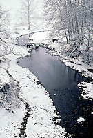 Cows crossing the stream in winter snow