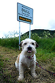 Dull - Pertshire - now officially paired with Boring - Oregon USA - Sam the terrier sticks his tongue out after the sign unveiling - picture by Donald MacLeod - 23.06.12 - 07702 319 738 - clanmacleod@btinternet.com - www.donald-macleod.com