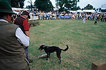 Hare coursing display at the 2000  Gamefair - Blenheim Palace , Oxfordshire.