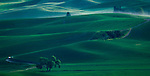 Green rolling hills in the Palouse Valley