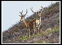 Ardeonaig Deer Stalking