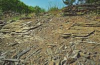 Soil sample in Anjou that shows the slate schist structure at the Domaine de Montgilet of Victor and Vincent Lebreton, Maine et Loire France Anjou